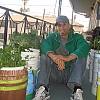 Mike Lieberman in his urban organic garden in Los Angeles.