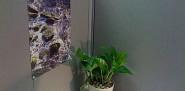 I transformed my cubicle using Ann's Feng Shui tips. --Chaya
