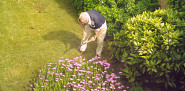 Photo of a man gardening by Mariegriffiths/Wikimediacommons