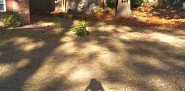 Yard cleared of leaves and branches