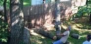 Hardworking tree removal crew