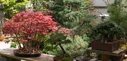 Bonsai plants. Photo: Erica Glasener