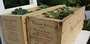 My own wine crate planters. --Adam