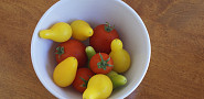 Organic gardener Jordan Laio is here with tips for growing beautiful, delicious tomatoes.