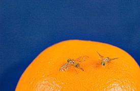 Photo: USDA/flickr