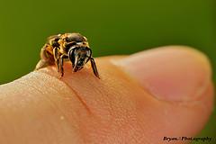 Photo: Bryan Sie/flickr