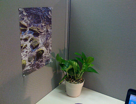 I transformed my cubicle using Ann's Feng Shui tips. --Chaya