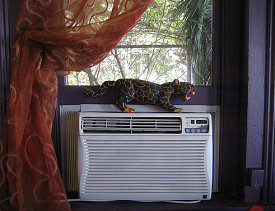 How much and where should an air conditioning unit drip