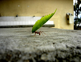 Where Ant Colonies Hide In Your House Networx