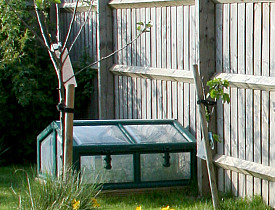 DIY Tips: Building a Mini-Greenhouse - Networx