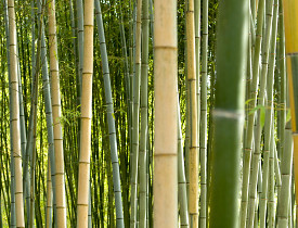 5 Reasons Not To Plant Bamboo In Your Ya on Cane And Bamboo Furniture
