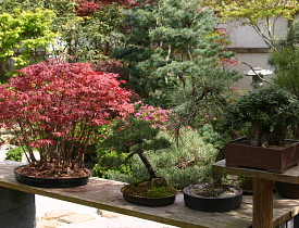 Bonsai plants. Photo: Erica Glasener