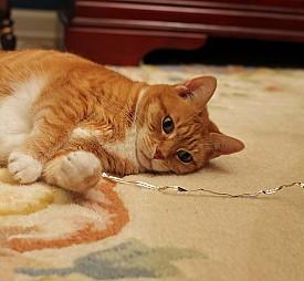 Photo: bnilsen/Flickr