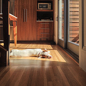 Pick The Right Flooring For The Climate Where You Live