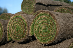 sod rolls on farm