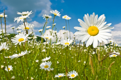 10 Flowers To Plant Right Now Networx