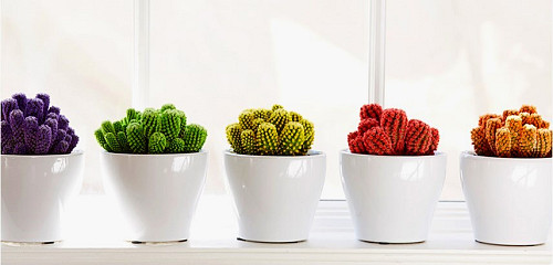 Indoor plants Desert Gems Cactus/courtesy Costa Farms