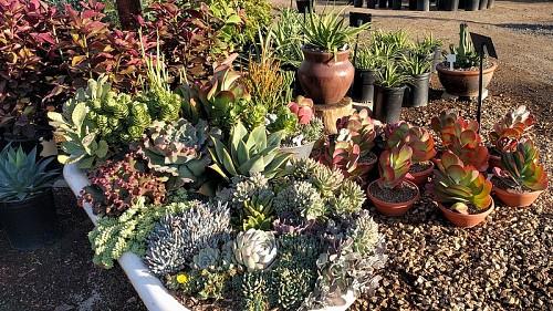 Recycled bathtub  cultivar 413 / flickr