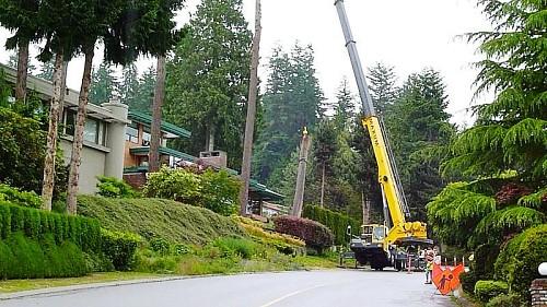 Tree removal by crane! Daves Tree Removal Canada / Wikimedia
