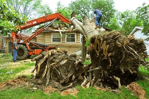 Damaged tree removal Win Henderson / Wikimedia