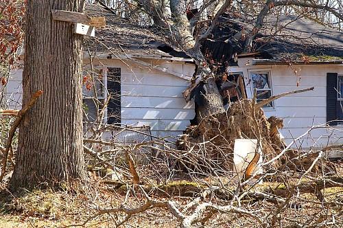 Fallen tree Arlington County / Wikimedia