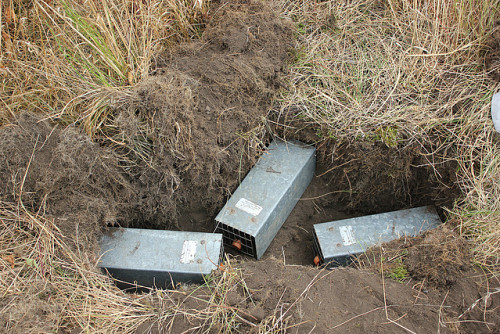 Photo Of Pocket Gopher Traps By Usfws Pacific Flickr