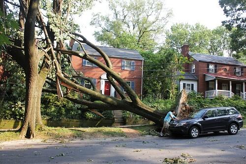 Tree damage Woodley Wonderworks / flickr