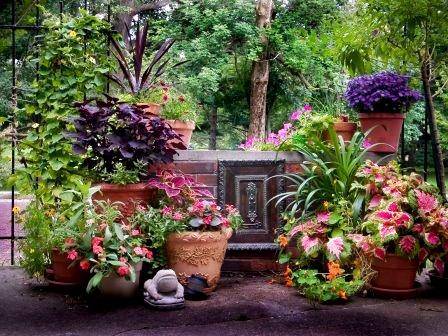 Houseplants outdoors  SBT4NOW / flickr