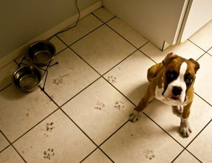 Footprints on tile floor  Jayca / flickr