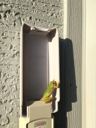 frog on garage door keypad by Todd Van Hoosear / flickr