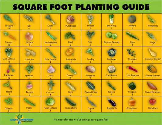 Guide to square foot gardening by Garden Therapy via Hometalk.com.