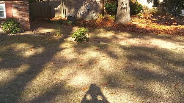 树叶和树叶留下了