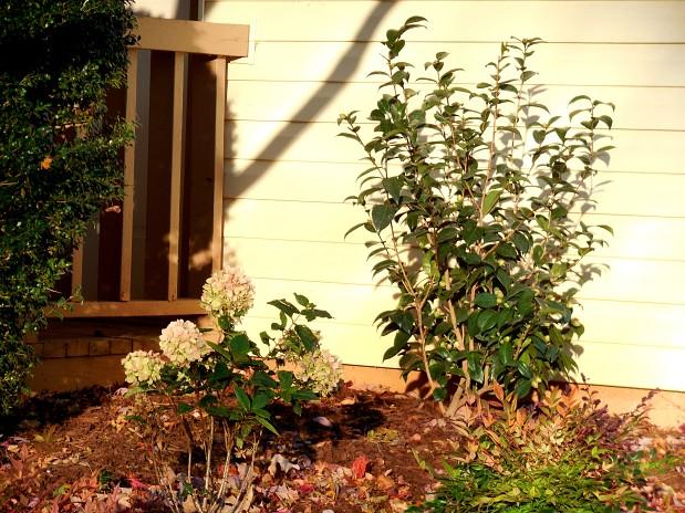 New landscaping closeup