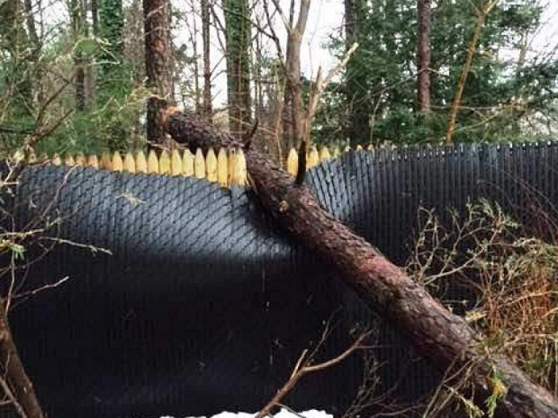 Before: fence crushed by a fallen tree