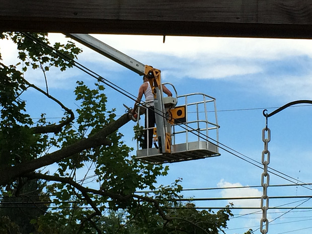 Tree removal without damaging electrical wires