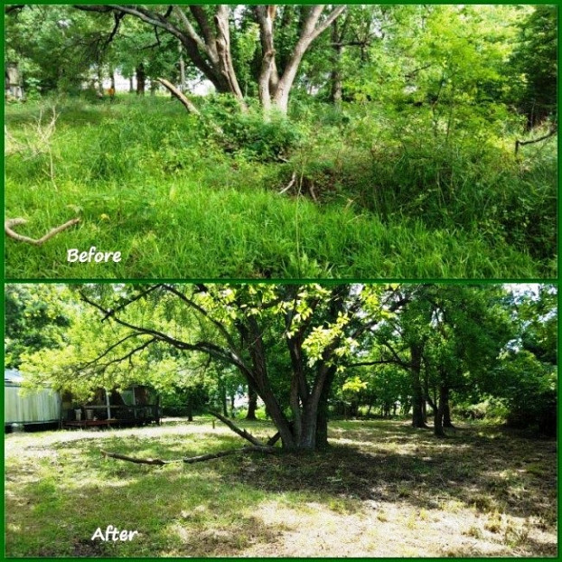 My yard before & after