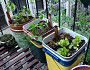 Photo of self watering planters by Mike Lieberman/Urbanorganicgardener.com.