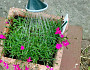 How To Make Self Watering Containers For Your Garden Networx