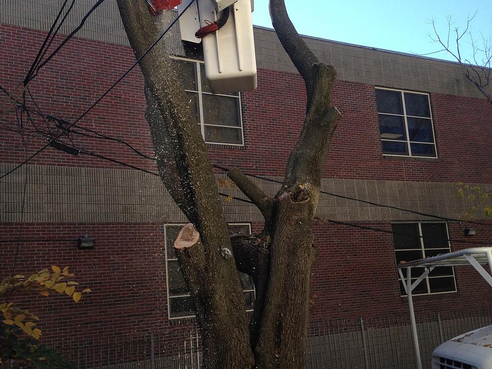 Zacarias Tree Amp Landscaping Networx