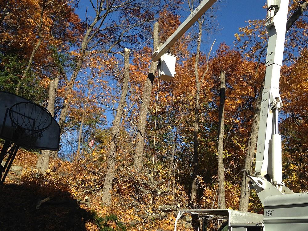 Zacarias Tree Service Networx