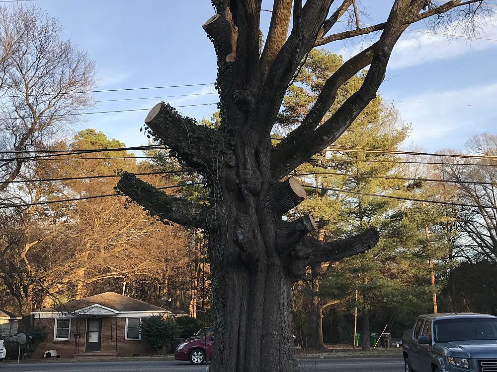 Aj S Tree Service Networx