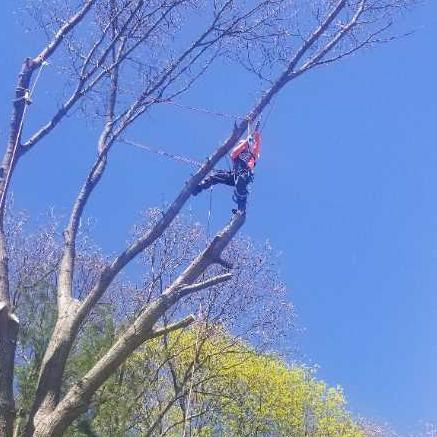 C Amp J Tree Service Peabody Ma 01960 Networx
