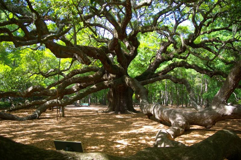 Four Legendary Trees Networx