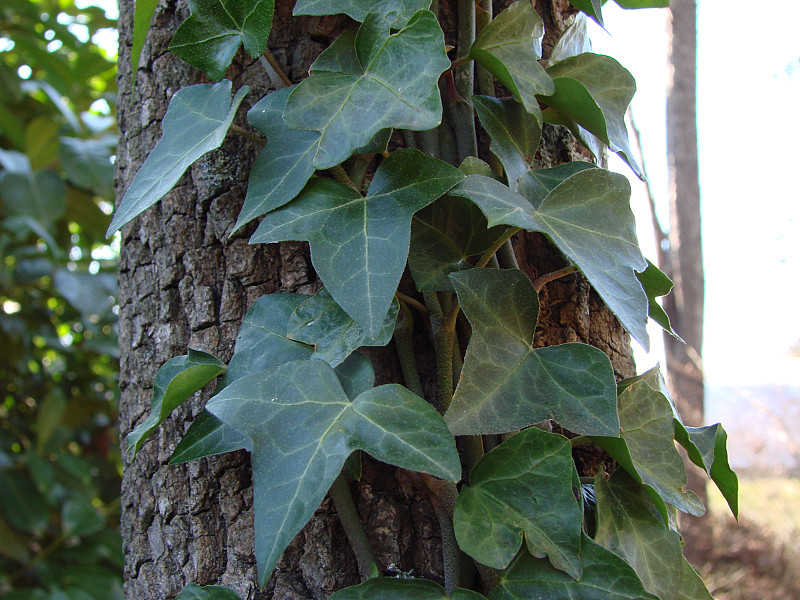 Five Invasive Plants Not To Plant In Your Garden Networx