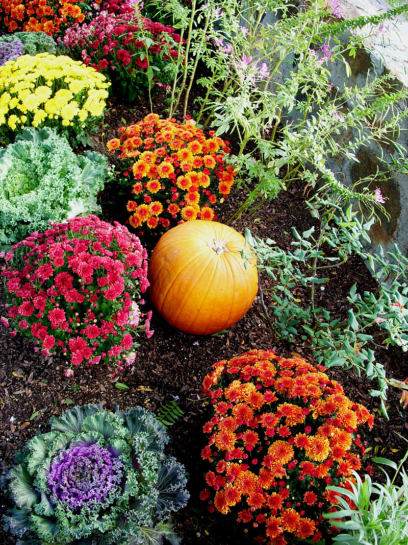 The best annual flowers for fall networx izmirmasajfo