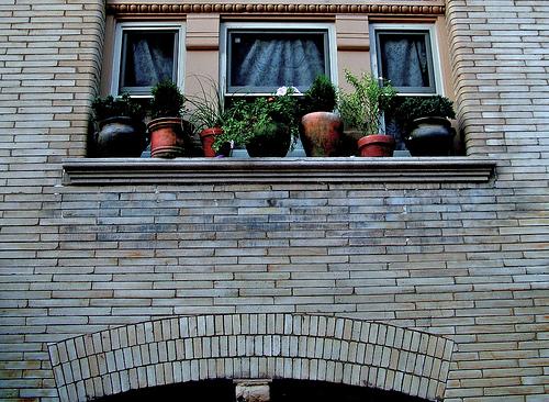 Grow Your Dream Garden In A Window Networx