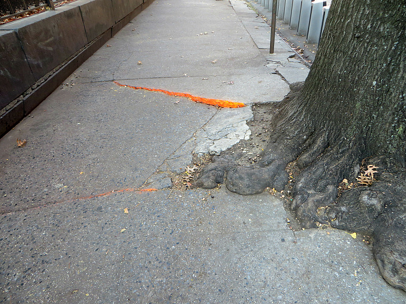 how to kill tree roots under concrete