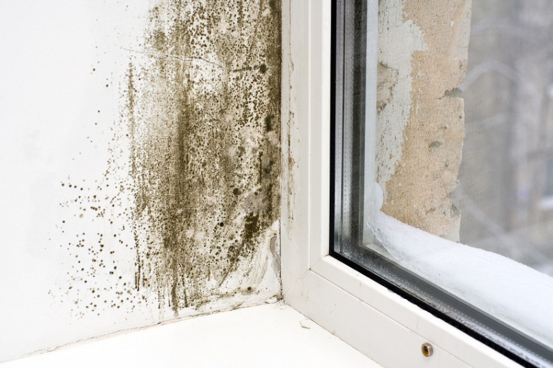 4 Reasons Why Your Damp House Is Wrecking Your Health   Networx