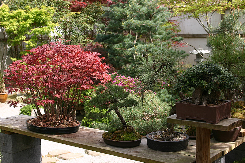 Bonsai For Beginners Networx