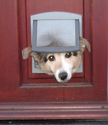 Pets Options For Doggie Doors Networx